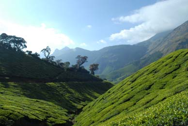 Munnar tour Packages- Kolukkumalai